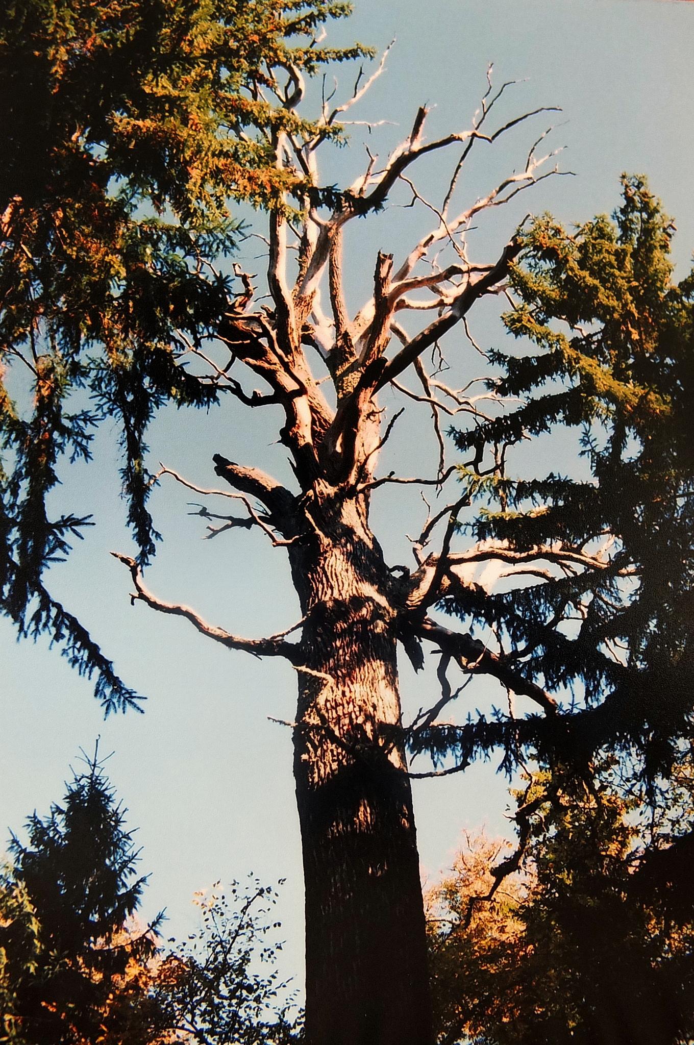 Drzew przemijanie